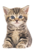 Cute domestic kitten. Isolated on white Stock Photo