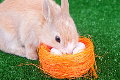 Cute domestic rabbit and easter eggs Royalty Free Stock Photos