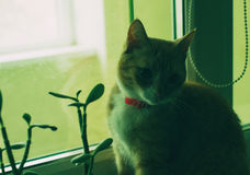 Cute domestic red cat on a sill Stock Photography