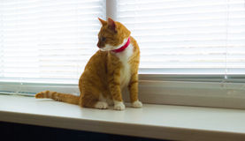 Cute domestic red cat on a sill Royalty Free Stock Image