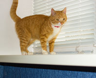 Cute domestic red cat on a sill Stock Photo