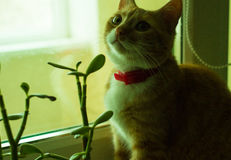 Cute domestic red cat on a sill Royalty Free Stock Images