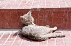 A cute kitten licking its fur on the steps of a monastery. A cute domesticated kitten licking its fur on the steps of a monastery, shot in Bhutan Royalty Free Stock Photography