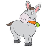 Cute donkey Stock Photo