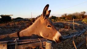 Cute donkey close up. In a farm Stock Photos