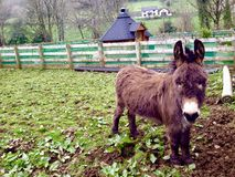 Cute donkey and country house. Royalty Free Stock Photo