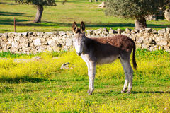 Cute donkey at countryside Stock Image