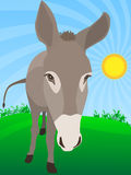 Cute Donkey in Farm Stock Photo