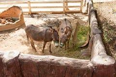 Cute donkey on the farm. donkey,donkeys,animal.  Royalty Free Stock Photography
