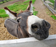 Cute donkey on the farm Stock Photos