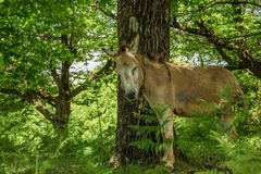 Cute donkey in the forest. Cute donkey in the fresh forest Stock Image