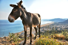 Cute donkey, magnificent view Stock Photos
