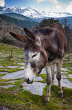 Cute donkey in nature Stock Photography