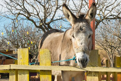 Cute donkey portrait at a park. Royalty Free Stock Image