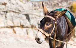 A cute donkey. In the street in Marvao, Portugal Royalty Free Stock Photography