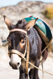 A cute donkey. In the street in Marvao, Portugal Stock Images