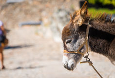 A cute donkey Royalty Free Stock Image