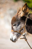 A cute donkey. In the street in Marvao, Portugal Royalty Free Stock Image