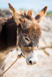 A cute donkey. In the street in Marvao, Portugal Stock Photos