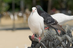 Cute doves Royalty Free Stock Photo