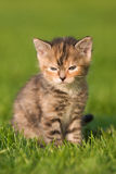 Cute dreaming kitten Stock Photo