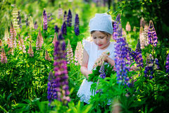Cute dreamy child girl picking lupin flowers for bouquet on summer field Royalty Free Stock Photography