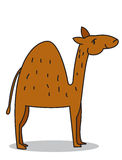 Cute dromedary royalty free stock photography