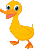Cute duck cartoon Stock Photo