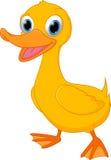 Cute duck cartoon Stock Photo