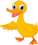 Cute duck cartoon presenting Royalty Free Stock Image