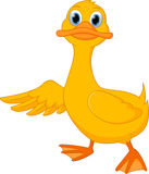 Cute duck cartoon presenting Royalty Free Stock Images