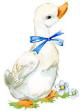 Cute duck. domestic farm bird watercolor illustration. Cute duck. domestic bird watercolor illustration Vector Illustration