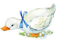 Cute duck. domestic farm bird watercolor illustration. Cute duck. domestic bird watercolor illustration Stock Images