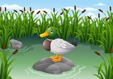 Cute duck on the rock. Illustration of Cute duck on the rock vector illustration