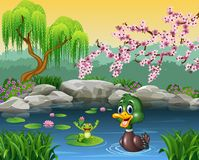 Cute duck swimming with frog Stock Photography