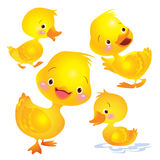 Cute duck yellow many actions. Cartoon baby ducks.  objects for design element Royalty Free Stock Photography