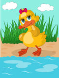 Cute duckling on the pond. Royalty Free Stock Photos