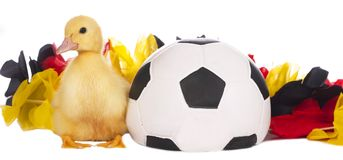 Cute duckling with soccer ball Royalty Free Stock Photos