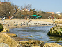 Cute ducks, pigeons and seagulls on the sea royalty free stock image