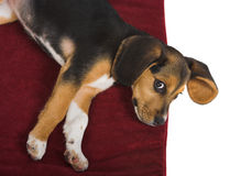 Cute ear Royalty Free Stock Photography