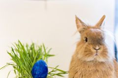 Cute Easter Bunny with blue egg Royalty Free Stock Photography