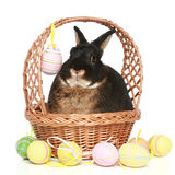 Cute easter bunny with colored eggs Stock Photo