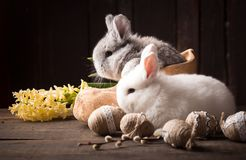Cute easter bunny with colored eggs Stock Photography