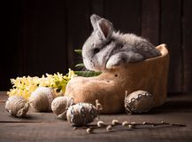 Cute easter bunny with colored eggs Stock Image