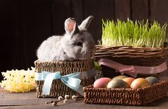 Cute easter bunny with colored eggs Stock Images