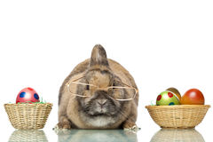Cute Easter bunny between colorful Easter eggs Stock Photos