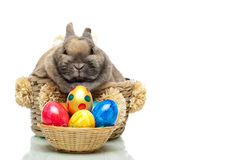 Cute Easter bunny with eggs sitting in basket Stock Photos