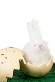 Cute Easter bunny in an eggshell Royalty Free Stock Photography