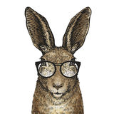 Cute Easter bunny with glasses. Cartoon vector illustration Royalty Free Stock Photography