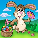 Cute Easter bunny on meadow Royalty Free Stock Images